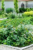 stock photo of english cottage garden  - summer garden - JPG