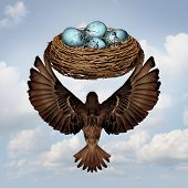 pic of bird egg  - Home moving concept and relocating real estate metaphor as a mother or father parent bird transporting a nest full of eggs for a change in neighborhood or business idea for changing or relocate an investment to a safer location - JPG
