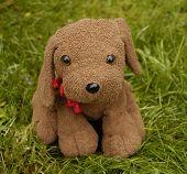 Dog - Toy