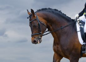 image of big horse  - delightful brown horse on sky background on the dressage competitions - JPG