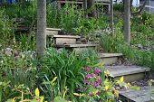 Wooden Stairs In A Lush Garden