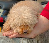 Perro durmiendo en la mano