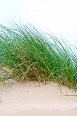 Sea Grass Growing On Sand