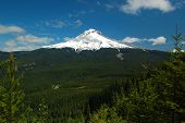 Mt. Hood y bosque