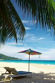 Coconut Umbrella