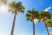 Summer sun background beach vacation palm trees with sun flare sunshine through the leaves of tree. poster