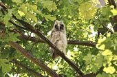 Forest bird of prey owl sitting on branch