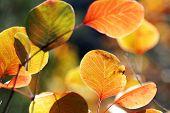 Herbstszenen, closeup