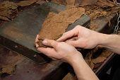 Rolling A Cigar In Costa Rica