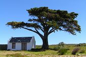 House Under Tree