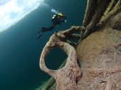 Tree root and diver
