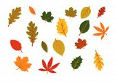 picture of fall leaves  - autumn leaves isolated on white background vector - JPG