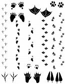 foto of paw-print  - Paw prints and tracks of six different animals. Top Row Left to right: Black Bear Seagull Cat. Bottom Row: Crow Beaver Black Tailed Deer