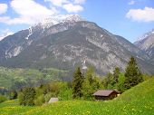 Alpine Meadow In Spring In Austrian Alps