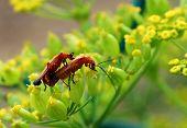 Luv Bugs