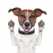 image of goodbye  - hello goodbye high five dog  and looking to front - JPG