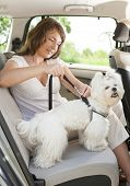 foto of seatbelt  - Owner of the dog attaching safety leash to harness to make a journey safe - JPG