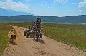 Carro de caballo con perro neumático y escolta