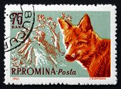 Postage Stamp Romania 1961 Red Fox And Feudal Hunter