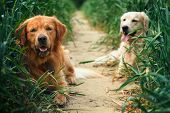 Portrait of two young dogs resting on a dirt road