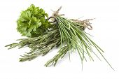 foto of chives  - Different kinds of herbs on isolated background - JPG