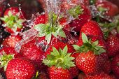 Ripe Red Strawberries Under A Water Jet