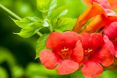 Red Flowers And Green Leaves Tree