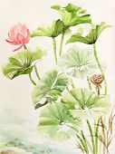 Lotus Leaves And Flower