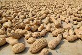 peanuts sundried