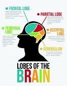 Lobes of The Brain. Infographic Vector Design