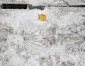 Road tiles patterned leaves