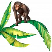 Baby Monkey Gorilla on palm tree leaves