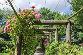 stock photo of pergola  - Ornamental garden with pergola and pink rosa - JPG
