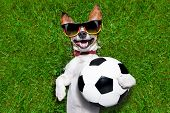 image of laugh out loud  - german soccer dog holding a ball and laughing out loud - JPG
