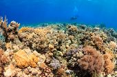 Endless Visibility - Sipadan Barrier Reef (sulu Sea)