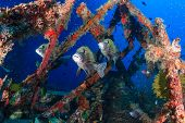 Tropical fish around a shipwreck
