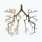 picture of life after death  - Abstract lungs before and after smoking on white background - JPG