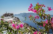 Purple Bougainvillea On The Island Of Santorini