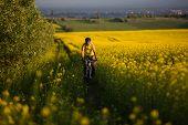 Mtb biker is cycling in yellow rapeseed field
