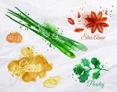 stock photo of ginger  - Spices herbs set drawn watercolor blots and stains with a spray star anise - JPG