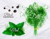 image of mint-green  - Spices herbs set drawn watercolor blots and stains with a spray black pepper - JPG