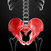 stock photo of pelvis  - 3d render pelvis under the X - JPG