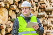 Forest Officer with tablet PC near pile of logs in forest