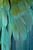 ������, ������: parrot feathers