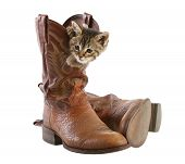 Kitten Playing In Boots