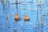 foto of flock seagulls  - Cubs of a sea seagull in coastal thickets - JPG