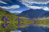 Amazing Landscape With Mountains, Lake And Reflection Of Beautiful Flowers