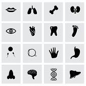 Vector black anatomy icon set