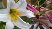stock photo of manor  - Pictures of Flowers from Coton manor in Northamptonshire uk - JPG