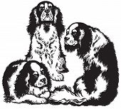 picture of three kings  - three blenheim cavalier king charles spaniels - JPG
